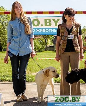 19 мая, Молодечно, Республиканская выставка собак всех пород Ndndd_13