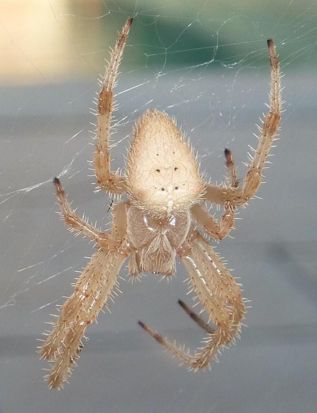 Bonjour, pouvez vous me confirmer l'espèce ? P1070615