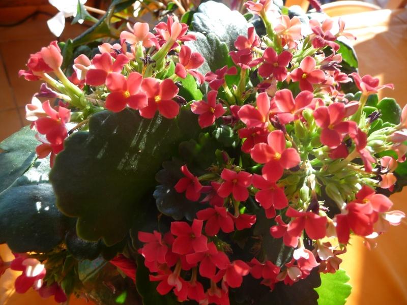 Les fleurs de FLEUR  P1010857