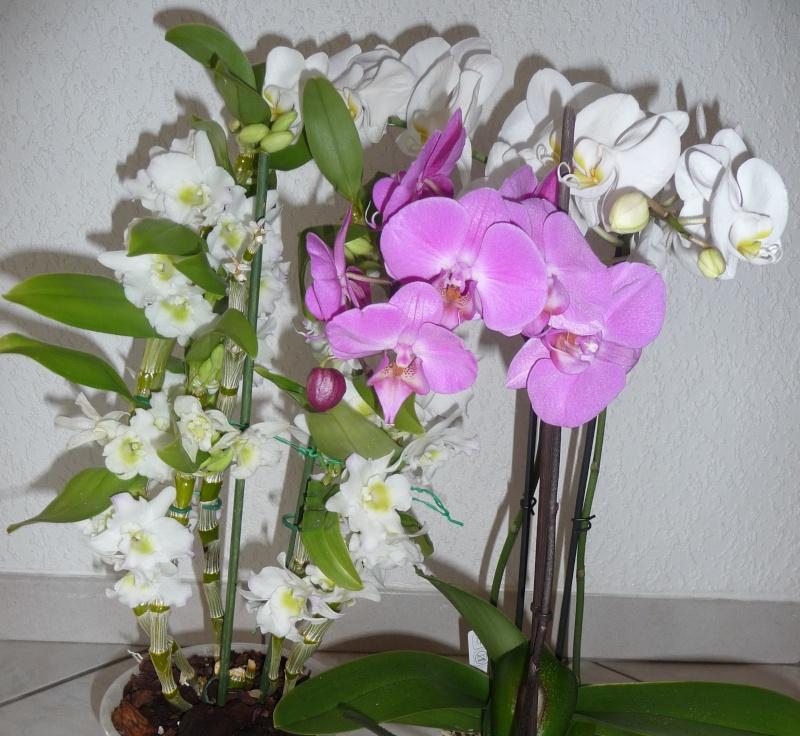 Les fleurs de FLEUR  P1010858