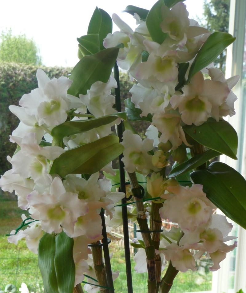 Les fleurs de FLEUR  P1010910