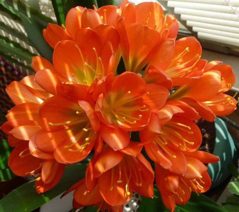 Les fleurs de FLEUR  P1010911