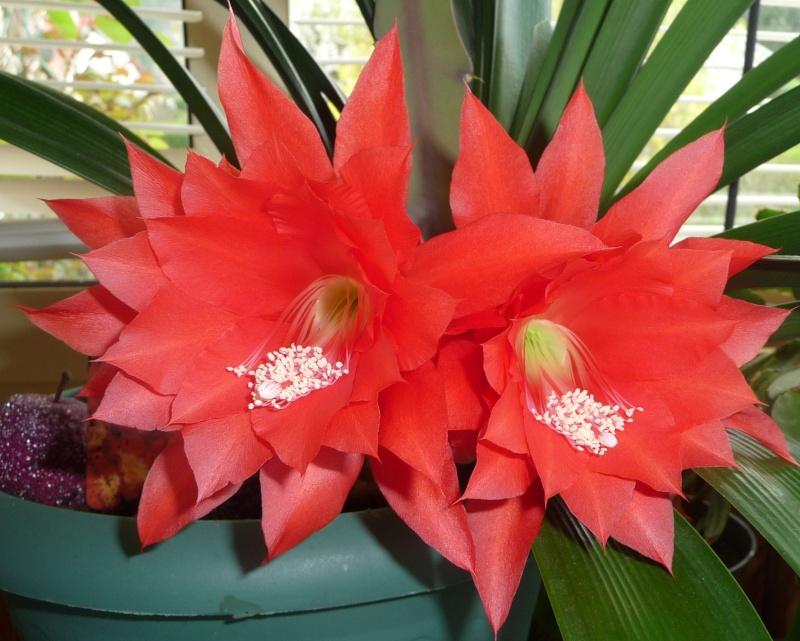 Les fleurs de FLEUR  P1010915