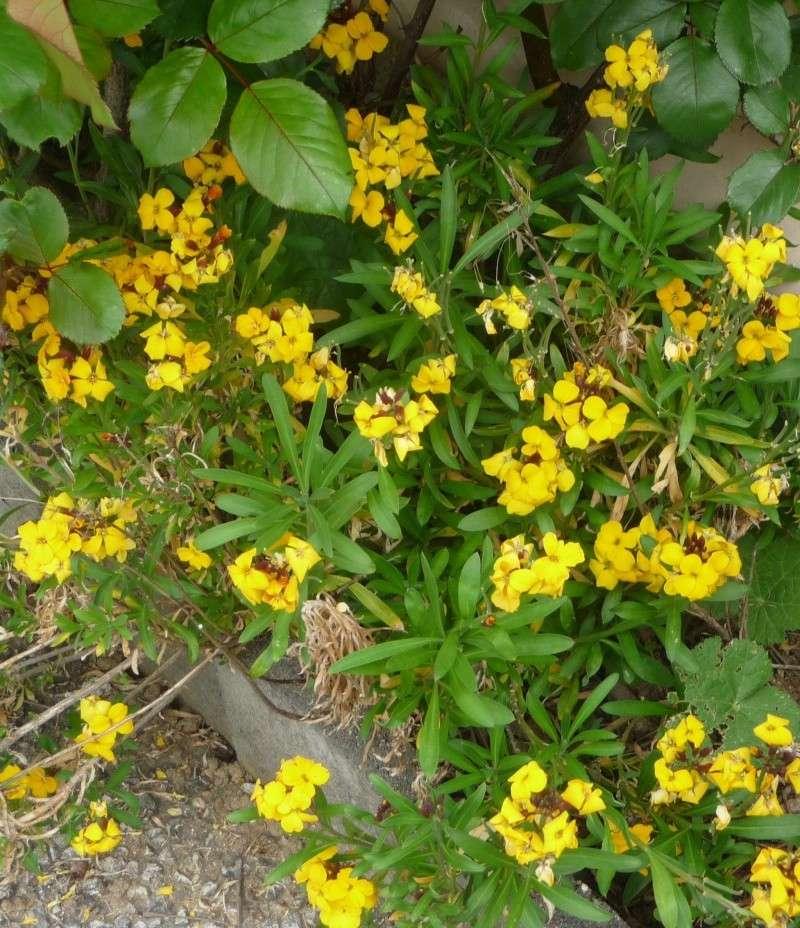 Les fleurs de FLEUR  P1010918