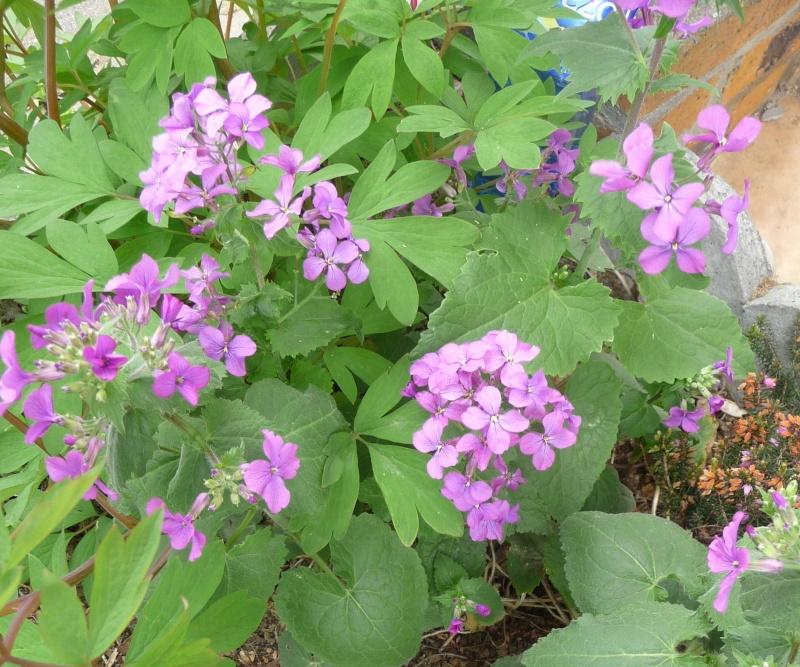 Les fleurs de FLEUR  P1010923