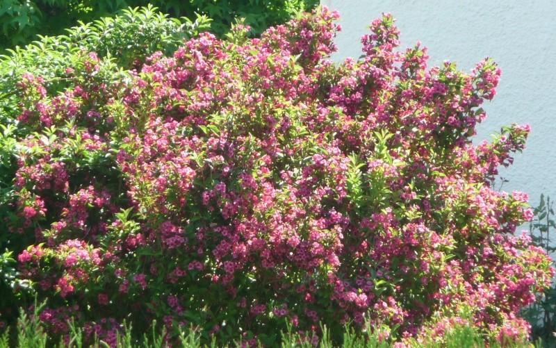 Les fleurs de FLEUR  - Page 2 P1010926