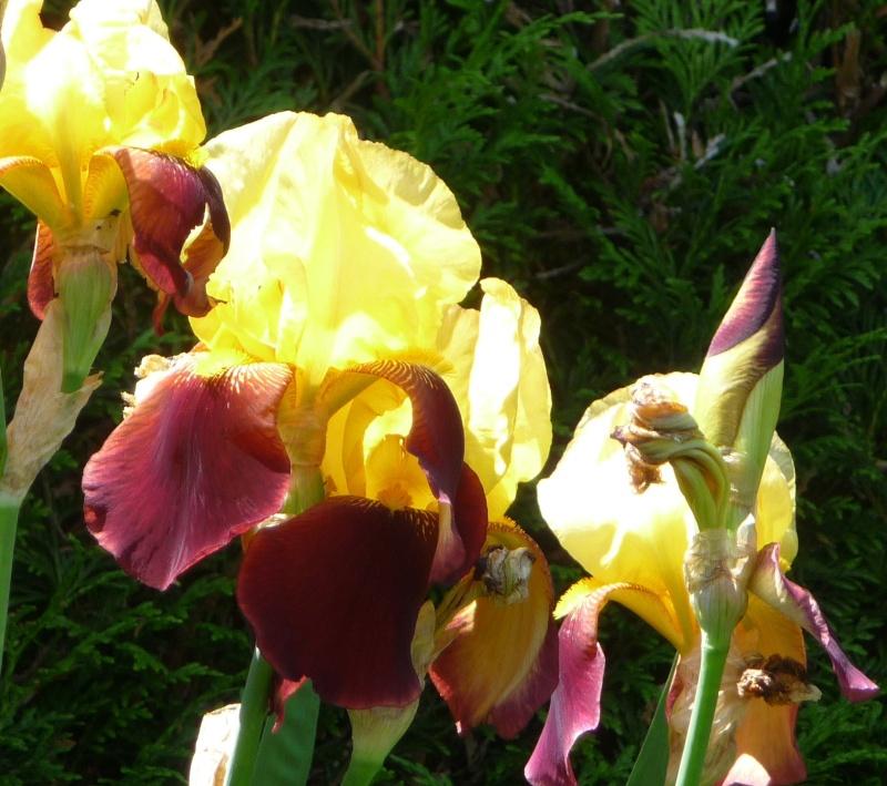 Les fleurs de FLEUR  - Page 2 P1010927