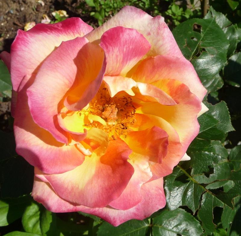 Les fleurs de FLEUR  - Page 2 P1010930