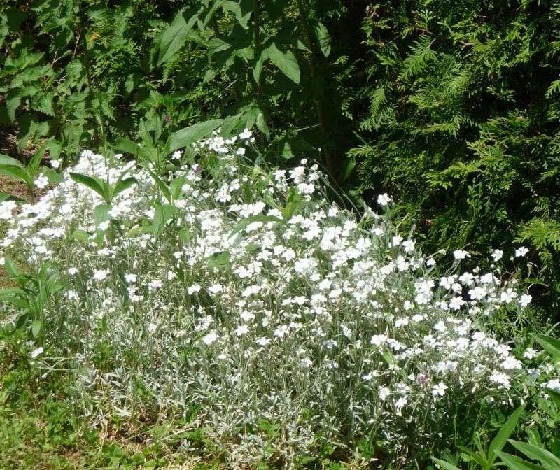 Les fleurs de FLEUR  - Page 2 P1010932