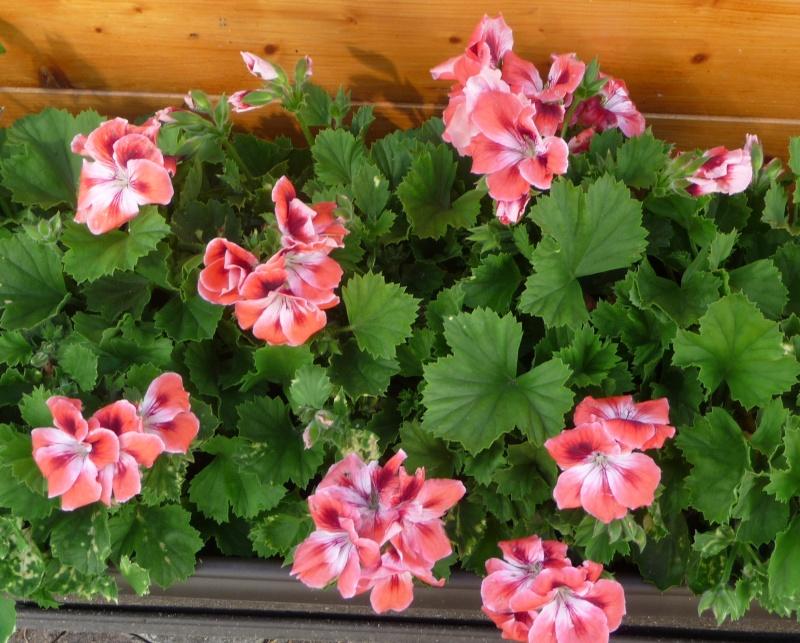 Les fleurs de FLEUR  - Page 2 P1010939