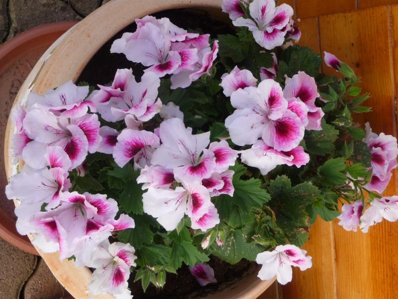 Les fleurs de FLEUR  - Page 2 P1010941