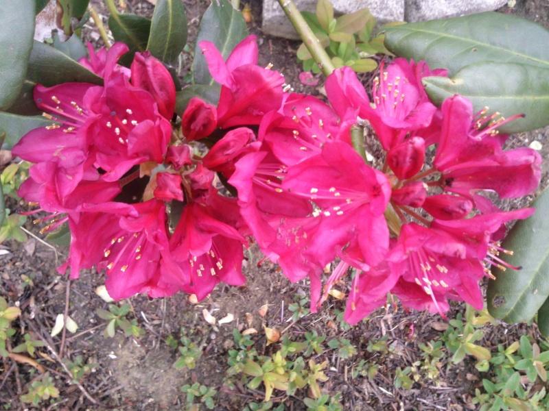 Les fleurs de FLEUR  Photo019