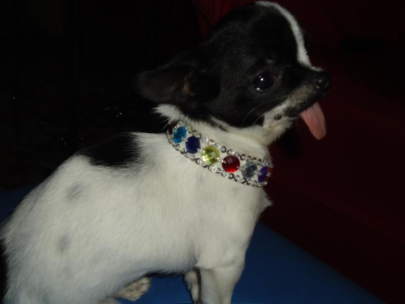 creation de colliers fantaisie pour Lola Dsc00613