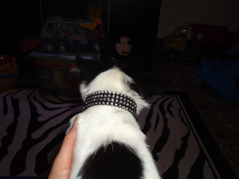creation de colliers fantaisie pour Lola Dsc00710