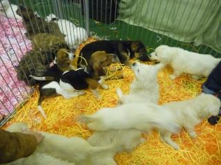 Salon du chiot et du chaton 2011 P1050317
