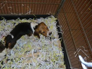 Salon du chiot et du chaton 2011 P1050324