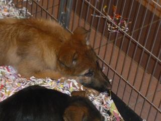Salon du chiot et du chaton 2011 P1050328