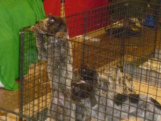 Salon du chiot et du chaton 2011 P1050331