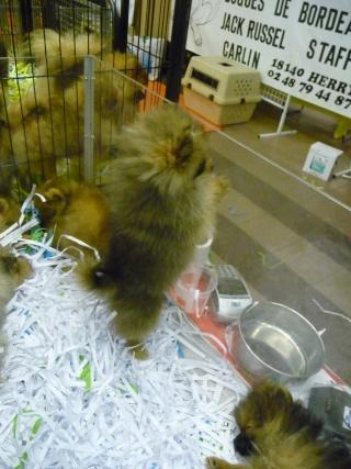 Salon du chiot et du chaton 2011 P1050336