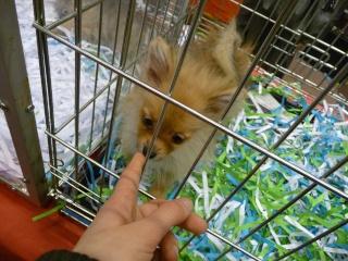 Salon du chiot et du chaton 2011 P1050337