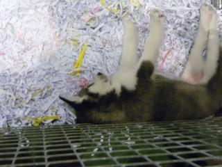 Salon du chiot et du chaton 2011 P1050346