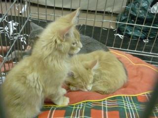 Salon du chiot et du chaton 2011 P1050411