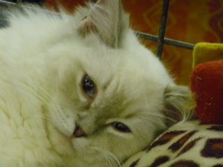 Salon du chiot et du chaton 2011 P1050413