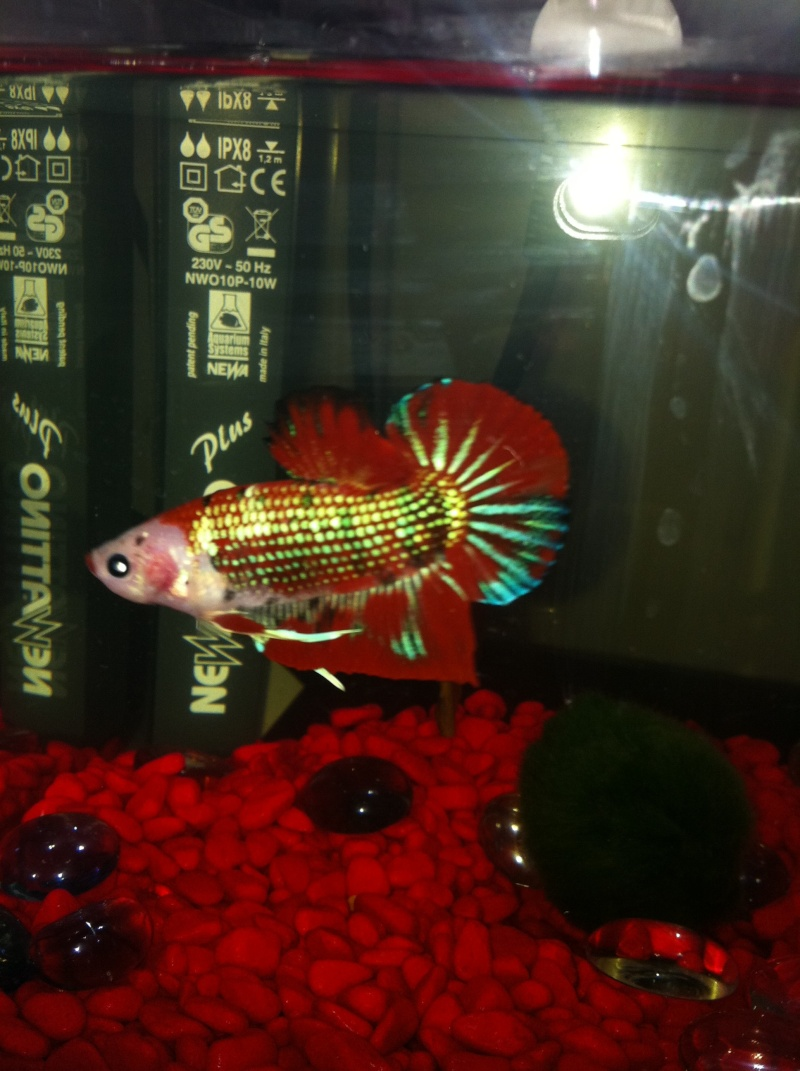 poisson abimé Rouge_12