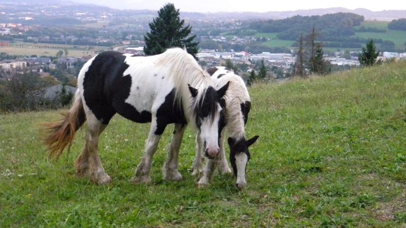 Petite Irish et son poulain de haute-Savoie 74 Dscn9820