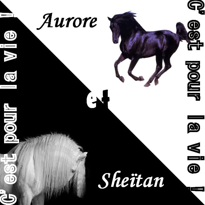L'atelier d'Aurore et de Sheïtan - Page 3 Aurore12