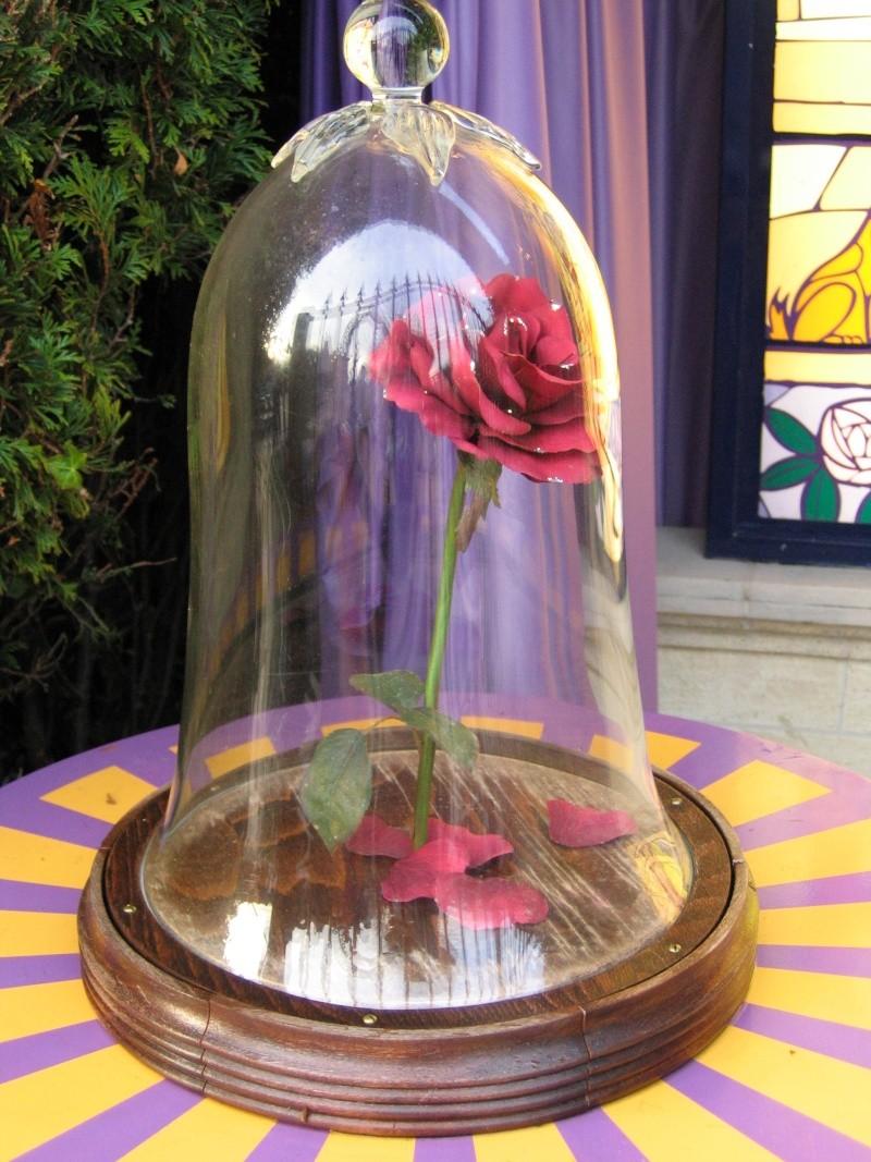 La Rose De La Belle Et La Bete