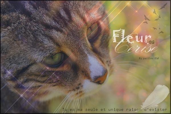 ☆ Fleur de Cerise ☆ A_brow10