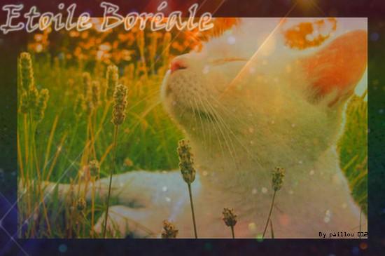 des amours Kittyc10