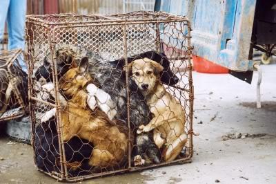 La Chine et les chiens : une histoire touchante Chinaf10