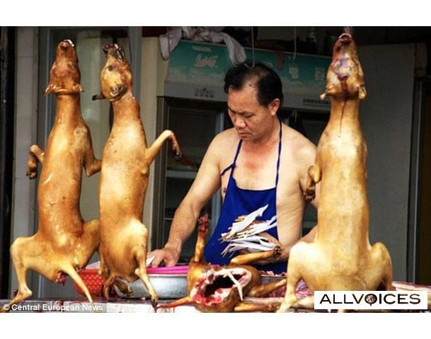 La Chine et les chiens : une histoire touchante Chines10