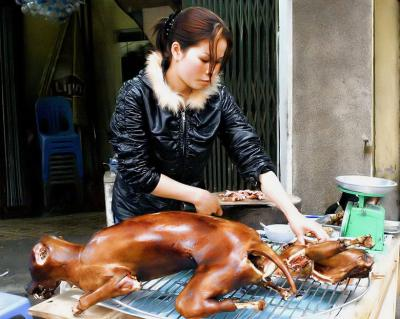 La Chine et les chiens : une histoire touchante Hnustn10