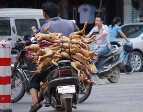 La Chine et les chiens : une histoire touchante Hnuswp10
