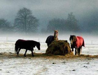 This Autumn Horses10