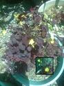 3 plantes inconnues Photo013