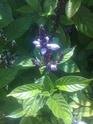 3 plantes inconnues Photo015