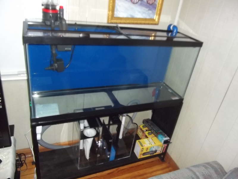 55 gallons set up 0411