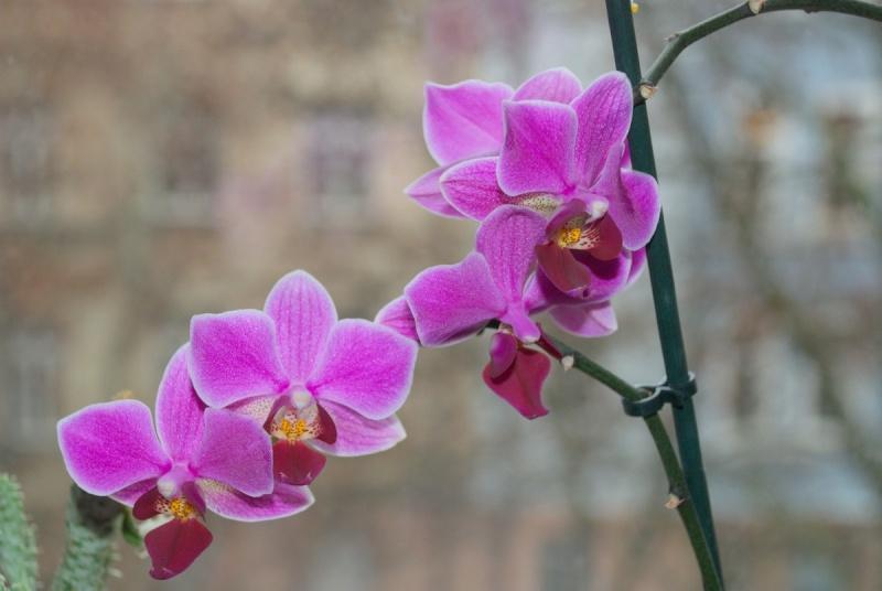 Orchideen - Seite 5 Bilder27