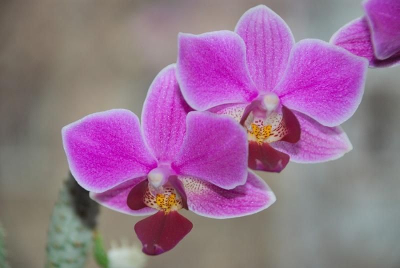 Orchideen - Seite 5 Bilder28