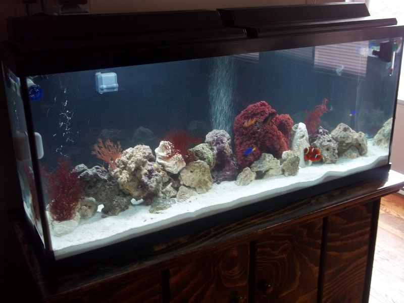 55  marine aquarium and my 56 display aquarium 01010