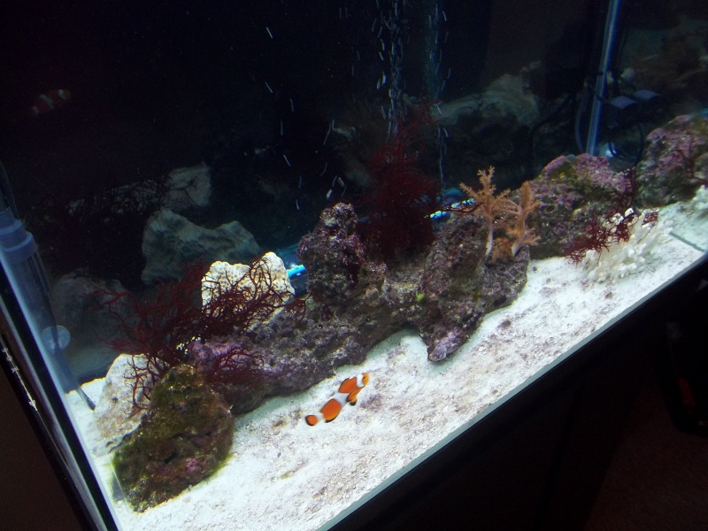 55  marine aquarium and my 56 display aquarium 01710