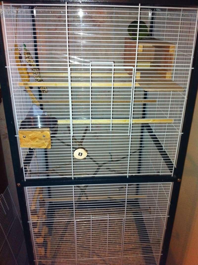 La cage de kiwi qu'en pensez-vous ? Cage_011