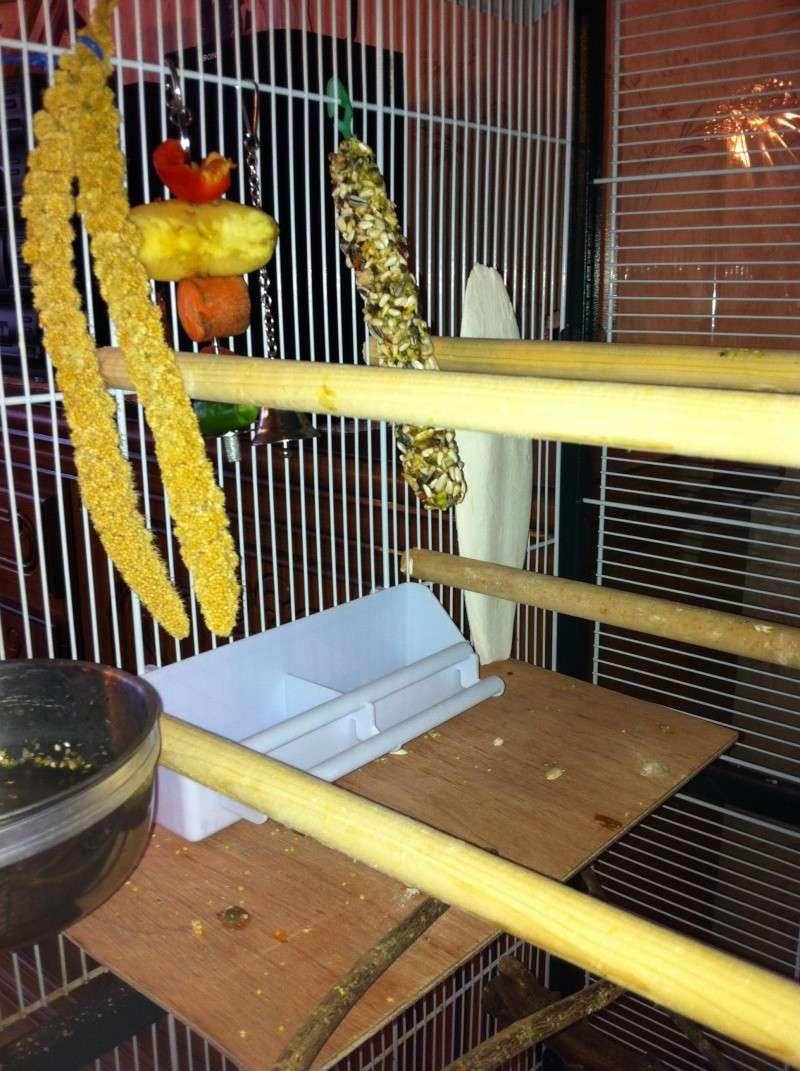 La cage de kiwi qu'en pensez-vous ? Cage_f11