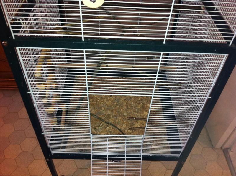 La cage de kiwi qu'en pensez-vous ? Cage_f14