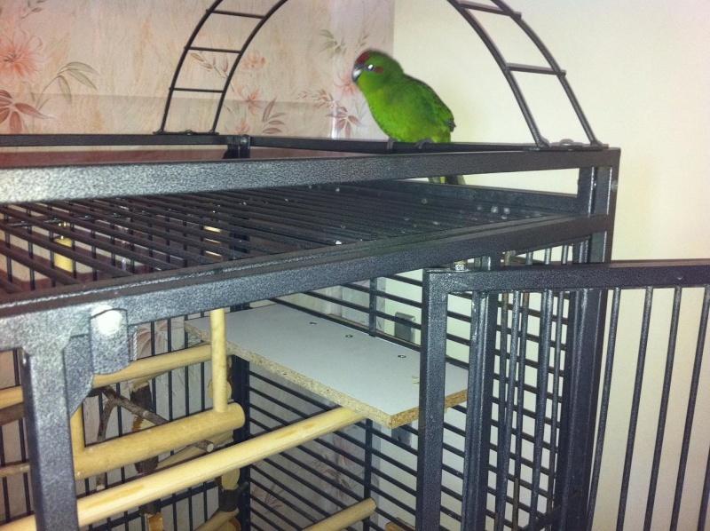 La cage de kiwi qu'en pensez-vous ? Kiwi_011