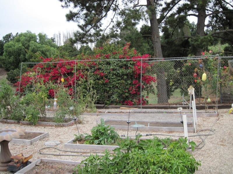 vertical gardening structures Img_0211